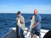 Striped Bass Fishing Hyannis